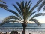 Marbella Palm.jpg
